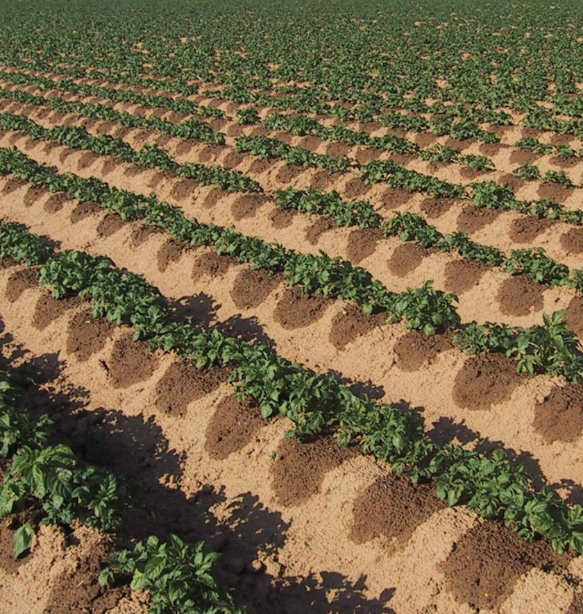 Innovator Highlight: Modern Drip Irrigation