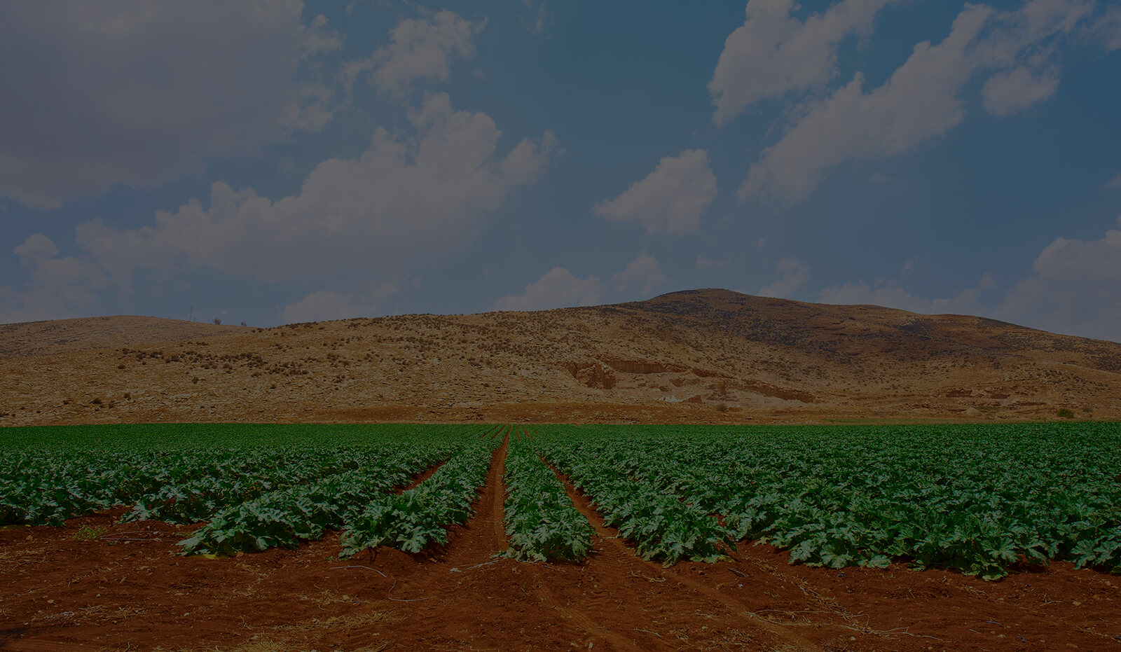 Dark Page Header: Israeli Pumpkin Plantation